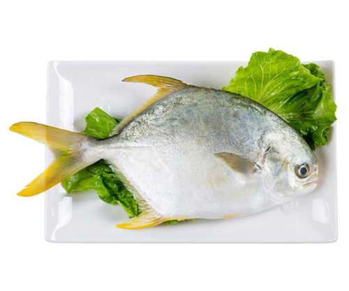 The bohai sea pomfret